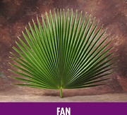FAN PALM-(4 per BAG)